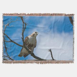 Cobertor Falcão na cobertura do lance da caça