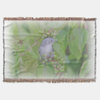 Cobertor Gnatcatcher das Azul-Cinzas