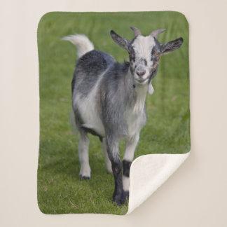 Cobertor Sherpa Cobertura de Sherpa da cabra do pigmeu