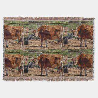 Cobertor Vaca de Brown na cobertura do lance dos tijolos