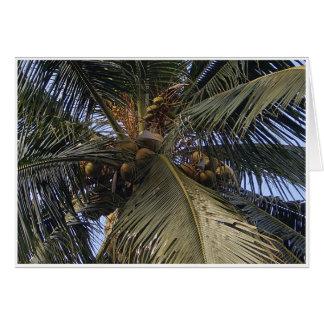 Cocos Cartão Comemorativo