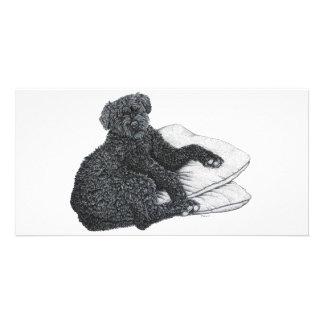 Cocotte, Sheepdog belga - cartão com fotos
