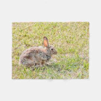 Coelho de coelho - páscoa - animais selvagens - cobertor de lã