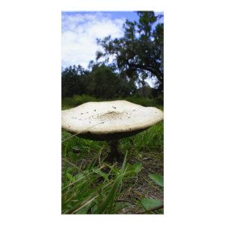 Cogumelo Cartoes Com Foto Personalizados