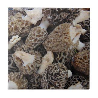 Cogumelos do Morel
