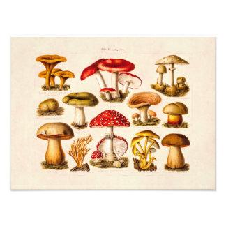 Cogumelos do vermelho da variedade do cogumelo dos impressão de foto