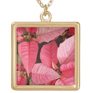 Colar Banhado A Ouro Natal cor-de-rosa colorido da poinsétia floral