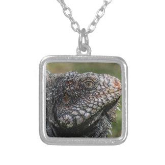 Colar Banhado A Prata 1920px-Iguanidae_head_from_Venezuela