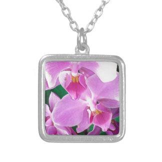 Colar Banhado A Prata A orquídea floresce close up no rosa