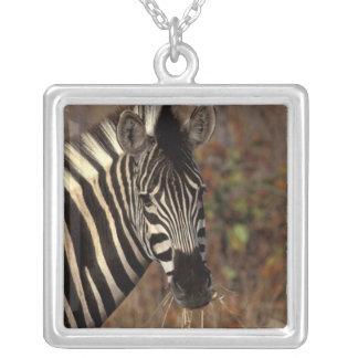Colar Banhado A Prata África, África do Sul, retrato da zebra de Kruger