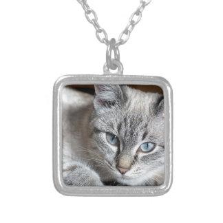 Colar Banhado A Prata Animal de estimação da cavala de Mieze do gatinho