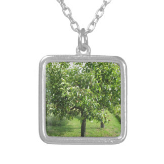 Colar Banhado A Prata Árvore de pera com folhas do verde e frutas