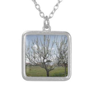 Colar Banhado A Prata Árvore de pera de florescência no jardim Toscânia,
