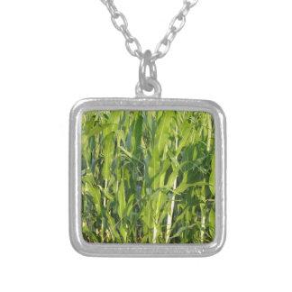 Colar Banhado A Prata As plantas de milho verde estão crescendo no verão