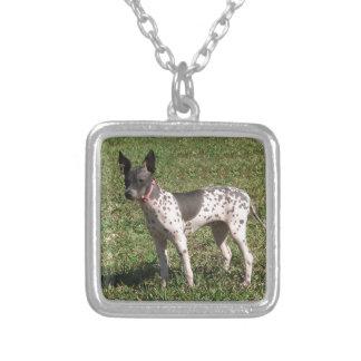Colar Banhado A Prata Cão calvo americano de Terrier