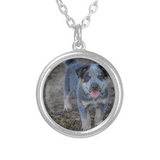 Colar Banhado A Prata Cão de filhote de cachorro australiano do gado