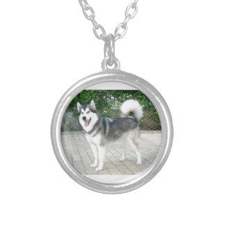 Colar Banhado A Prata Cão de filhote de cachorro do Malamute do Alasca