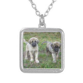Colar Banhado A Prata Cão de filhotes de cachorro anatólio do pastor