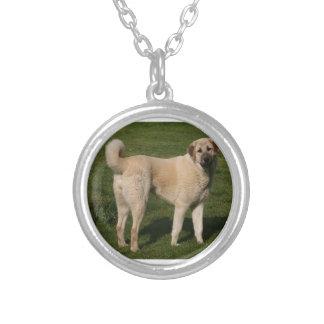 Colar Banhado A Prata Cão de pastor anatólio
