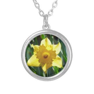 Colar Banhado A Prata Daffodil amarelo 02.2_rd