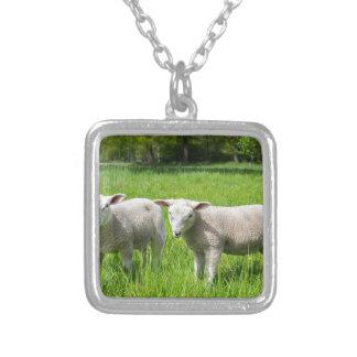 Colar Banhado A Prata Dois carneiros holandeses brancos no prado verde