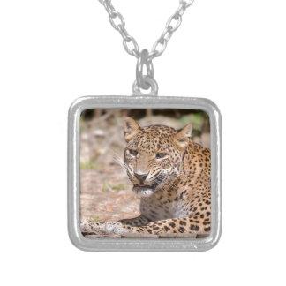 Colar Banhado A Prata Encontro do leopardo
