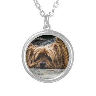 Colar Banhado A Prata Filhote de cachorro bonito de Yorkshire
