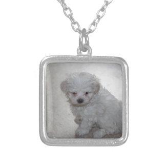 Colar Banhado A Prata filhote de cachorro maltês
