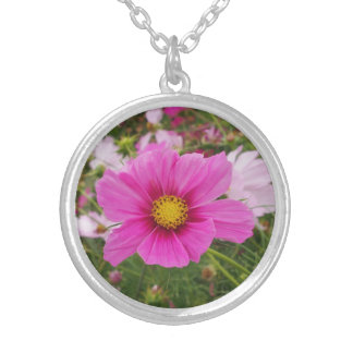 Colar Banhado A Prata Flor cor-de-rosa bonito do cosmos