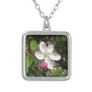 Colar Banhado A Prata Flor cor-de-rosa da maçã no primavera. Toscânia,