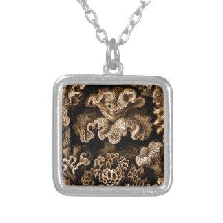 Colar Banhado A Prata Hexacoralla coral nos marrons