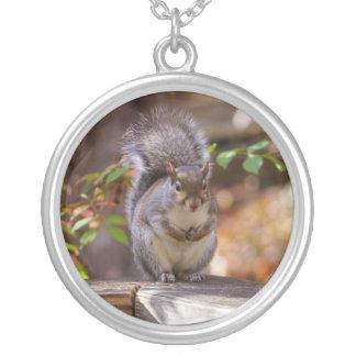 Colar Banhado A Prata Implorando o esquilo