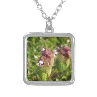 Colar Banhado A Prata Morto-provocação roxa (purpureum do Lamium) no