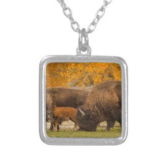 Colar Banhado A Prata Nação da família do bisonte