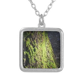 Colar Banhado A Prata O musgo verde no detalhe da natureza de musgo