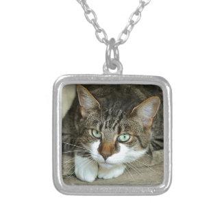 Colar Banhado A Prata Os olhos de gato