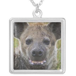 Colar Banhado A Prata Retrato manchado da hiena, croduta do Crocuta,