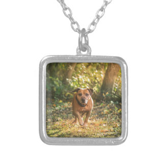 Colar Banhado A Prata Staffordshire bull terrier