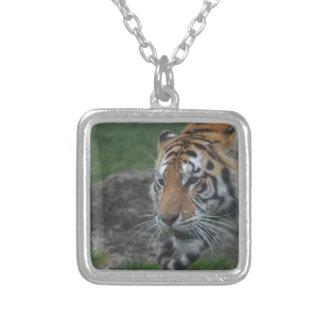 Colar Banhado A Prata tigre