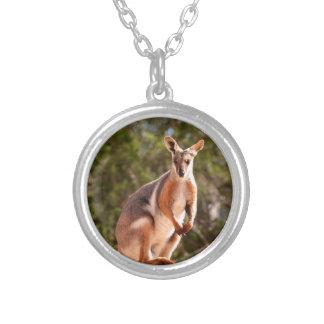 Colar Banhado A Prata Wallaby de rocha amarelo-footed australiano