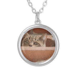 Colar Banhado A Prata Wildcat novo curioso da atenção dos olhos de gato