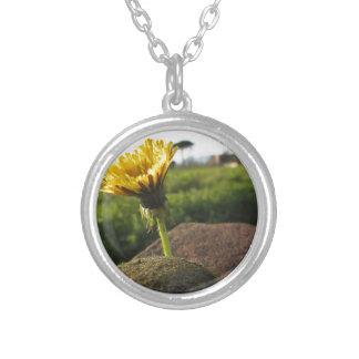 Colar Banhado A Prata Wildflower amarelo que cresce em pedras no por do