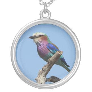 Colar colorida do pássaro