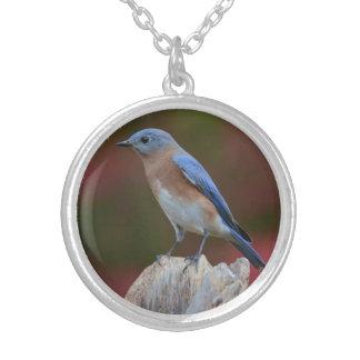 Colar impressionante do Bluebird