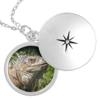Colar Medalhão Lagarto da iguana