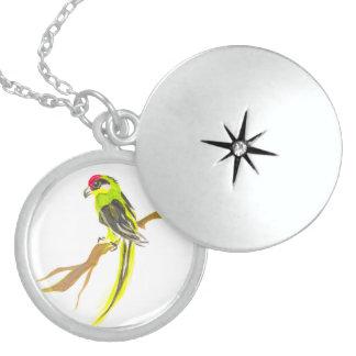 Colar Medalhão Papagaio em um ramo. Pintura da aguarela