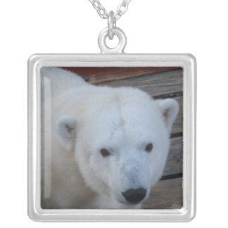 Colar nova do urso polar