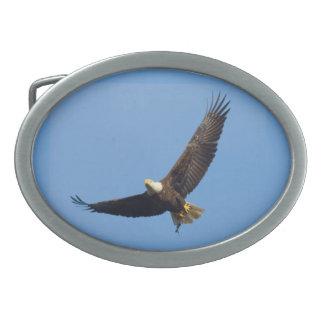 Coleção americana do mamífero da águia calva