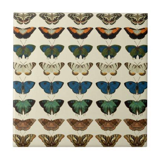 Coleção da borboleta azulejo