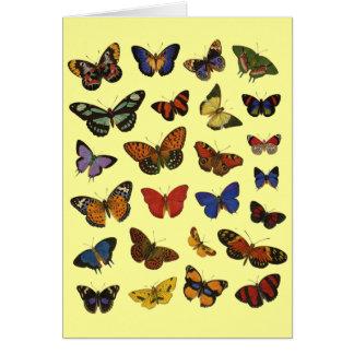 Coleção da borboleta cartão comemorativo